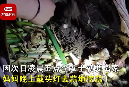 连夜去地里挖的!女儿五一返程妈妈送40斤大蒜网友泪目