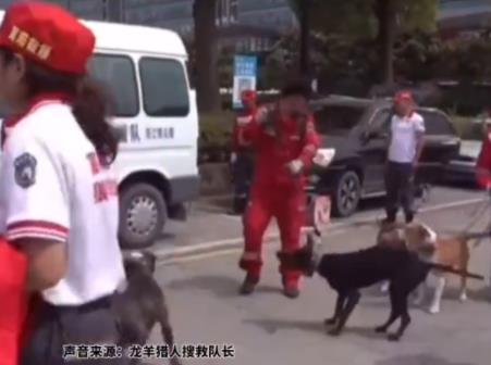 辟谣了!杭州第二只豹子被咬死为假消息