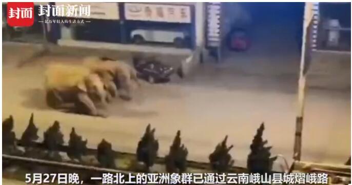 云南15頭大象罕見向北遷移!已走了大半年,網友:馬上到昆明了!