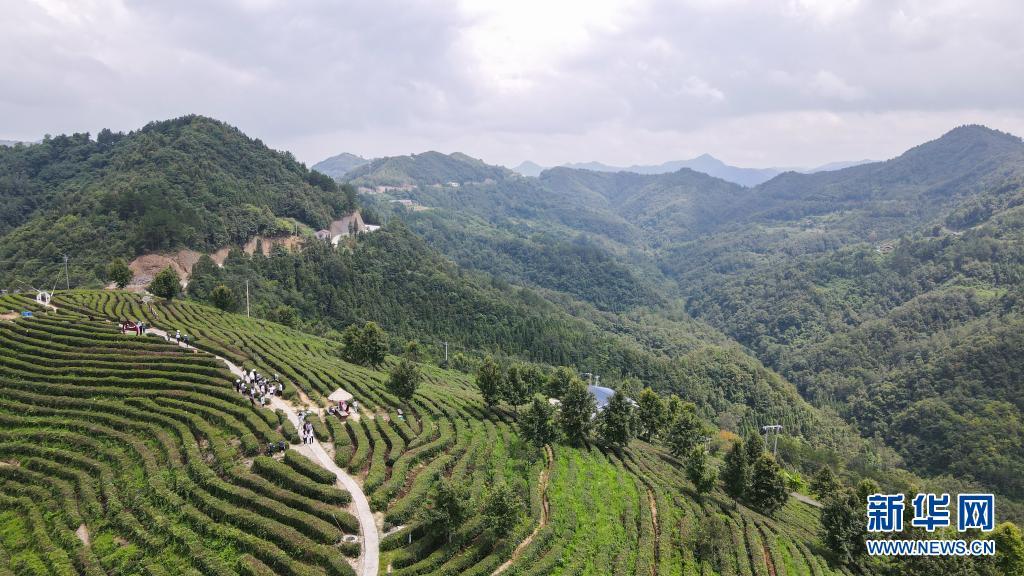 建设人与自然和谐共生的美丽家园——习近平生态文明思想基层生动实践新观察