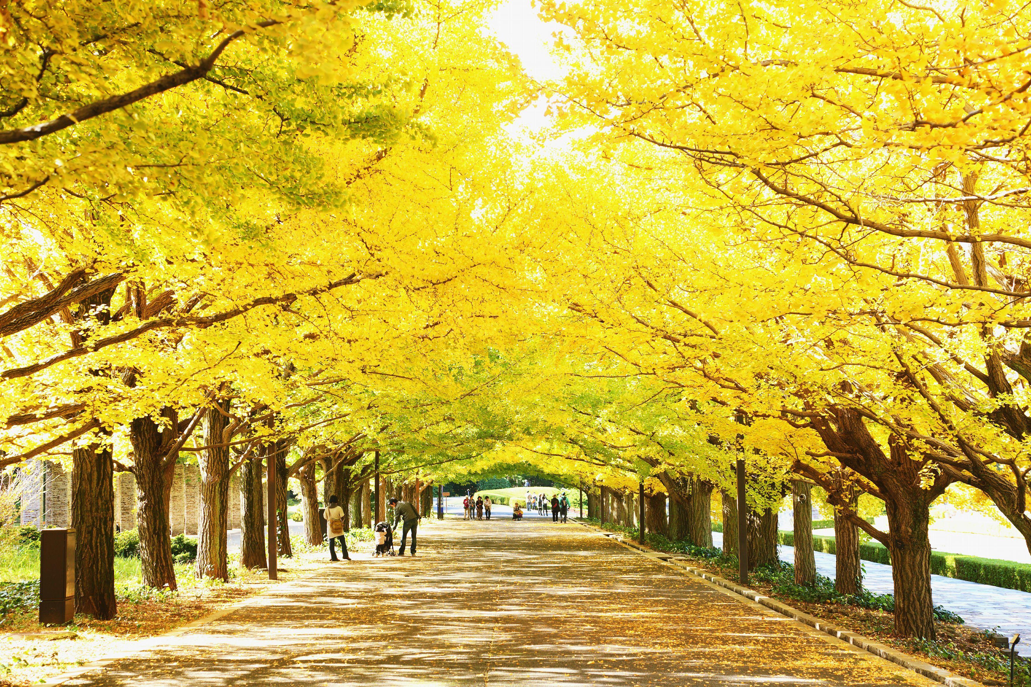 秋季养生 要注意预防呼吸疾病