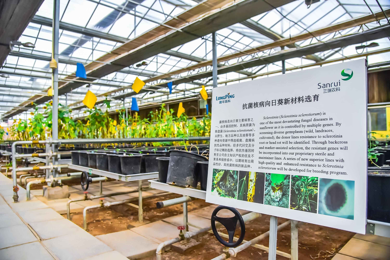 一粒葵花子的逆袭:河套农业的40年发展史