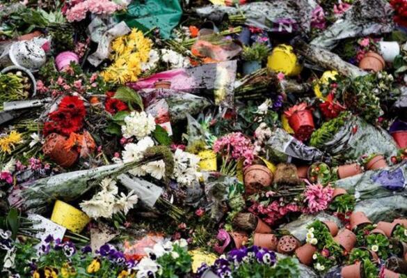荷兰销毁百万鲜花 郁金香进入荷兰近400年深得喜爱被评为国花