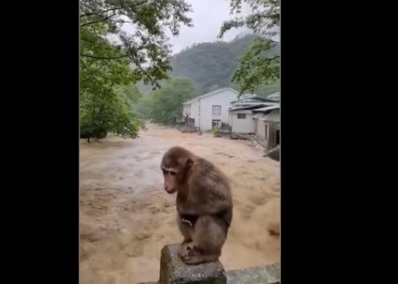 武夷山雨中猴子蹲桥上避险   武夷山具体位置在哪里?