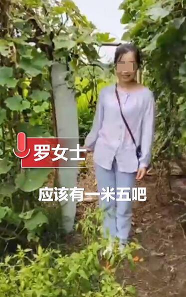 成精了!农户种出1米5高冬瓜 网友:再也不是矮冬瓜了