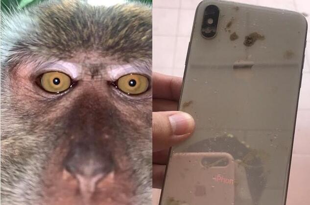 马来西亚:猴子偷手机后疯狂自拍 鬼鬼祟祟录制视频