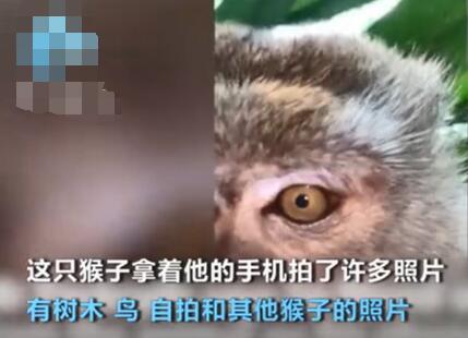 """成精了!猴子偷手机后疯狂自拍还玩起了吃手机的""""吃播"""""""